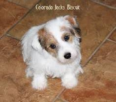 Hypoallergenic Dog Breeds That Dont Shed by Top 10 Small Dogs That Don U0027t Shed Dog Fur Babies And Animal