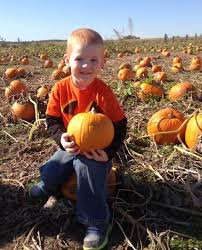 Pumpkin Patches Maryland Heights Mo by The Pumpkin Patch Train Ride In Missouri That U0027s Perfect For A Fall Day