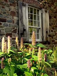 Osh Christmas Trees by Gardens The Old Stone House In Brooklyn
