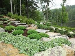Garden Ideas Landscaping Rock Evergreens Cotoneaster Flowering Shrubs