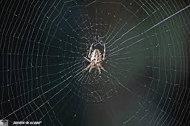 les toiles d araignées sous toutes leurs formes le