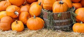 Pumpkin Patches In Phoenix Az 2013 by Events Official Travel Site For Scottsdale Arizona