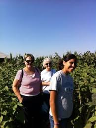Wheatland Pumpkin Patch by On The Way To Bishops Pumpkin Patch Wheatland My Vacation