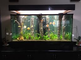 Amazing Home Aquarium Ideas Contemporary - Best Idea Home Design ... Amazing Aquarium Designs For Your Comfortable Home Interior Plan 20 Design Ideas For House Goadesigncom Beautiful And Awesome Aquariums Cuisine Small See Here Styfisher Best Stands Something Other Than Wood Archive How To In Photo Good Depot Kitchen Cabinet Sale 12 To Home Aquarium Custom Bespoke Designer Fish Tanks Perfect Modern Living Room Lighting 69 On Great Remodeling Office 83 Design Simple Trending Colors X12 Tiles Bathroom 90