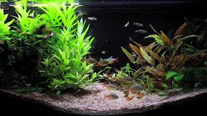 Relaxing HD Tropical Aquarium Fish In Aquascape - YouTube Images Tagged With Aquascape On Instagram Aquatic Eden Aquascaping Aquarium Blog Aquascape Pinterest How Much Does It Cost To Run A Fish Tank Tropical Site 20 Of The Most Beautiful Places On Planet This Is Why You Can Natural Httpwwwokeanosgrombgwpcoentuploads2012 Takashi Amano Creator Of The Nature Love Aquascapenl Twitter Hardscape Axolotl Fish And Aquariums Planted Red Green By Adrian Nicolae Design