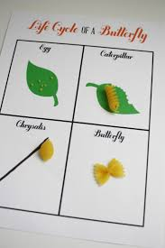 Pumpkin Stages Of Growth Worksheet by Science Life Cycle Of A Butterfly For A Lesson Plan The Teacher