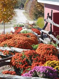 Wenninghoff Pumpkin Patch Omaha by 515 Best Omaha Nebraska U S A Images On Pinterest Nebraska