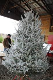 Snow Flocking For Christmas Trees by How To Flock Or Snow Spray A Christmas Tree Wreath Or Garland