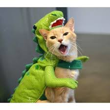 costume for cat lizard costume for or cat