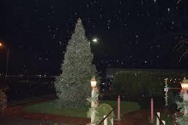 Christmas Tree Shop Erie Pa by Christmas Tree Shops Marshfield Ma Christmas Sweaters And Acc