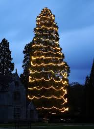 Flagpole Christmas Tree Uk by Britain U0027s Biggest Christmas Tree Which Is Taller Than Three Double