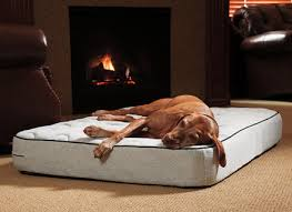 dr foster and smith orthopedic dog beds noten animals dog beds and