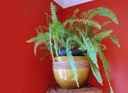 Best Plant For Your Bathroom by 16 Best Home Work Report Shower Plants Images On Pinterest