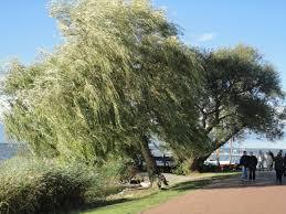 fleur et plante du lac images gratuites plage arbre fleur lac vent vacances