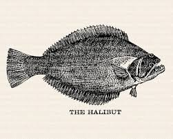 Vintage Halibut Image Fish Illustration From Antique Book Digital Stamp Clip