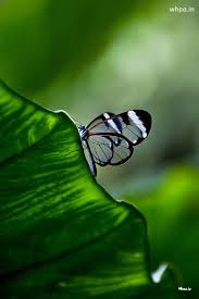 Butterfly Sitting On A Leaf Hd Wallpaper