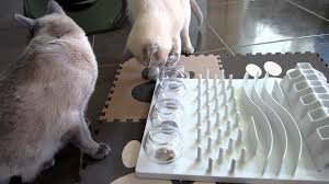 Tonkinese & Cat Activity Fun Board Food & Treat Puzzle HD