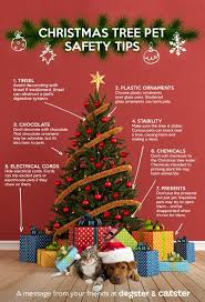 Are Christmas Trees Poisonous To Dogs Uk by Bonnie Dogs Blog U2022 Dog Caring Measuring And Grooming