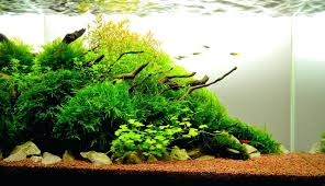 Aquarium Aquascaping The Nature Style Planted Tank Awards ... My Life Story Aquascape Gallery Aquascapes Pinterest Aquascaping Live 2016 Small Planted Tanks The Surreal Submarine World Of Amuse Category Archives Professional Tank Enchanted Forest By Tommy Vestlie Aquarium Design Contest Awards 100 Ideas Aquariums Fish Tanks And Vivarium Avatar Fish Tank Google Search Design Aquascape Ada Aquascaping Contest Homedesignpicturewin Award Wning Amenagementlegocom Legendary Aquarist Takashi Amano Architecture