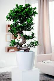 Plants For The Bathroom Feng Shui by Feng Shui Plants For Harmony And Positive Energy In The Living