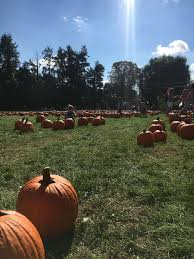Apple Pumpkin Picking Queens Ny by Home Weekend Jaunts