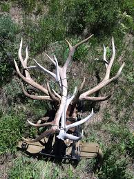 Shed Hunting Utah 2017 by 2016 2017 Shed Hunting Pic Heavy