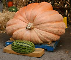 Fertilizer For Giant Pumpkins by Why Can U0027t We Grow Fruit The Size Of Cars National Geographic