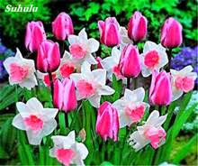 buy daffodil bulbs and get free shipping on aliexpress