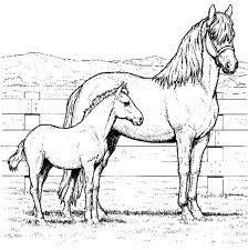 Online Horses Coloring Pages 93 On Line Drawings With