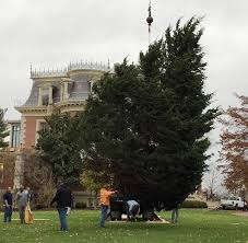 30 Foot Eastern Red Cedar Tree Being Placed On The Lawn Of Governors Mansion