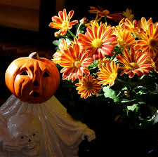 Pumpkin Patch Pittsburgh by Keep Your October Interesting 10 Events And Activities To Attend