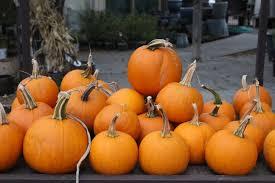 Varieties Of Pie Pumpkins by The Weird And Warty Bath Garden Center