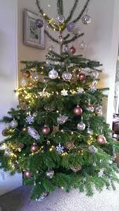 Types Of Live Christmas Trees by Real Christmas Trees For Sale Needlefresh Uk