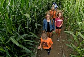 Pumpkin Patches Santa Cruz Area by Corn Mazes Present Business Opportunities For Bay Area Farms