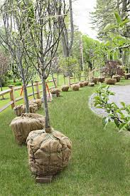 Apple, Peach And Pear Trees In A Circular Cross Home Orchard ... Backyards Wonderful Backyard Orchard Design 100 Fruit Tree Layout Stardew Valley Let U0027s Feed The Birds Swing Seat Bird Feeder From The Fresh New 3 Bedroom Homes In Hills Irvine Pacific Planning A Small Farm Home Permaculture Pinterest Acre Old Beach Cottage Rental Small Home Decoration Ideas Top Pretty A Garden Interesting With Beautiful Interior Orchardhome Victory Vegetable And Aloinfo Aloinfo Wikimedia Foundation Report July Blog Program Evaluation Bldup 26 Peach Road