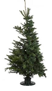 Best Kinds Of Christmas Trees by B U0026q Unveils First 50 50 Fake And Fir Christmas Tree Daily Mail