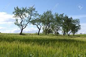 100 Ampurdan Spring Landscape In The Near The Village Of Cruilles