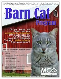 Montgomery County Animal Services And Adoption Center - Barn Cat ... Ferals Strays And Barn Cats Cat Tales Tuesdays Fun And Aww My Moms Is Gorgeous Viralspell The Care Feeding Of Timber Creek Farm Program Buddies Seeking Support For Its Catsaving Efforts Adoption Barn Cats Near Bardstown Ky Petfinder For Green Rodent Control Turn To Barn Cats The Flying Farmers Free Images Wood Old Animal Cute Wall Pet Rural Sitting On Top Of Bales Straw Ready To Pounce Stock Weve Got Hire Central Missouri Humane Society By Jsf1 On Deviantart