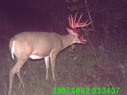 buck shedding antlers i never knew they bled so much wtf