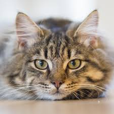service cats cat sitting services and friendly pet sitters