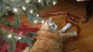 Simons Cat Christmas Tree by How To Avoid A Christmas Tree Cat Astrophe If Your House Is Feline