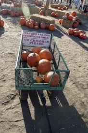 Pumpkin Patch Farm Temecula by Halloween 2013 Peltzer Farms Pumpkin Patch U2013 Press Enterprise