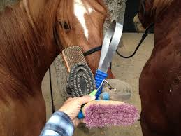 Horse Hair Shedding Blade by Basic Grooming The Tie Rail