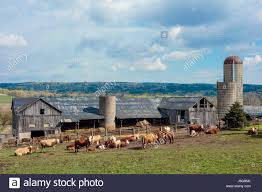 Cattle In Front Of Barn With Silo In Spring In Northumberland ... Old Red Farm Barn With Concrete Silo Stock Photo Picture And Yellow With Canada Suzanne Berton Cute And Free Clip Art Barn Silo Donnasdesigns Cornfield A Silos In Rural Wisconsin Filered A Panoramiojpg Wikimedia Commons Image 21504700 Beautiful White 113806882 Shutterstock Photos Images Alamy Barns J F Mazur Fine Studio Playhouse Plan 300ft Wood For Kids Pauls Clipart 33