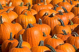 Pumpkin Picking In Chester Nj by Where To Go Pumpkin Picking And Apple Picking In Nj