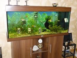 aquarium d eau douce aquariophilie eau douce et eau de mer aquafaune bron69 josiane