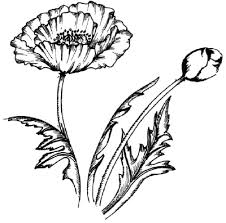 Flower Image Gallery Learn How To Draw This Poppy See More Pictures Of Flowers