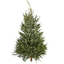 Which Christmas Tree Smells The Best Uk by 9 Of The Best Real Christmas Trees And Where To Find Them The