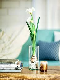 100 Home Ideas Magazine Australia Paper Whites Bulbs The Magic Of Holidays At Garden And