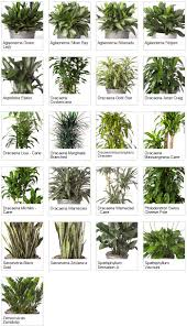 Plants For Bathrooms With No Light by Beautiful Indoor Plants No Light Images Amazing House Decorating